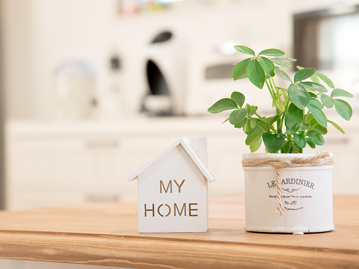 家の模型と植物